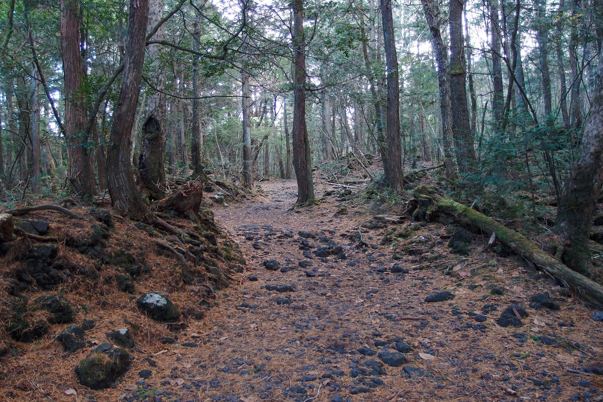 Aokigahara (or Suicide Forest), Japan