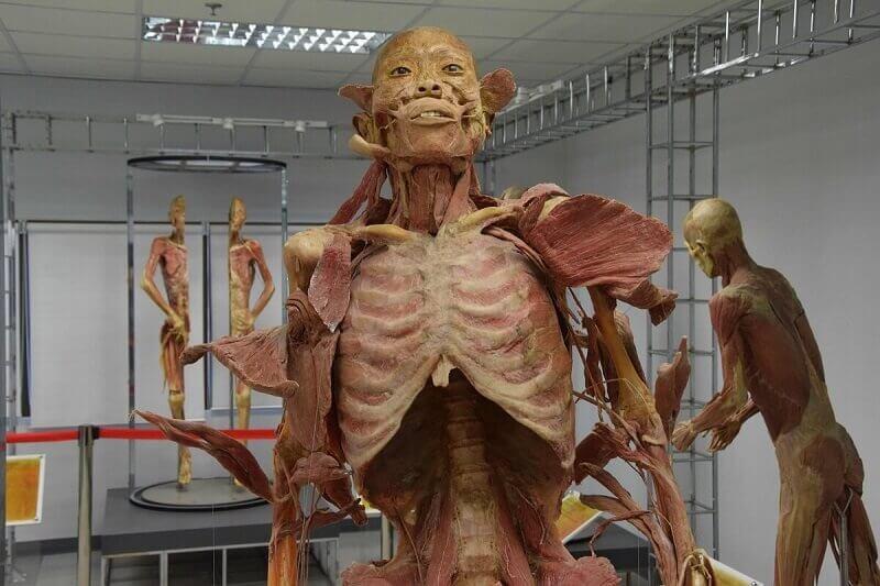 Bizarre-Bangkok-Tour-Museum-of-Forensic-Medicine