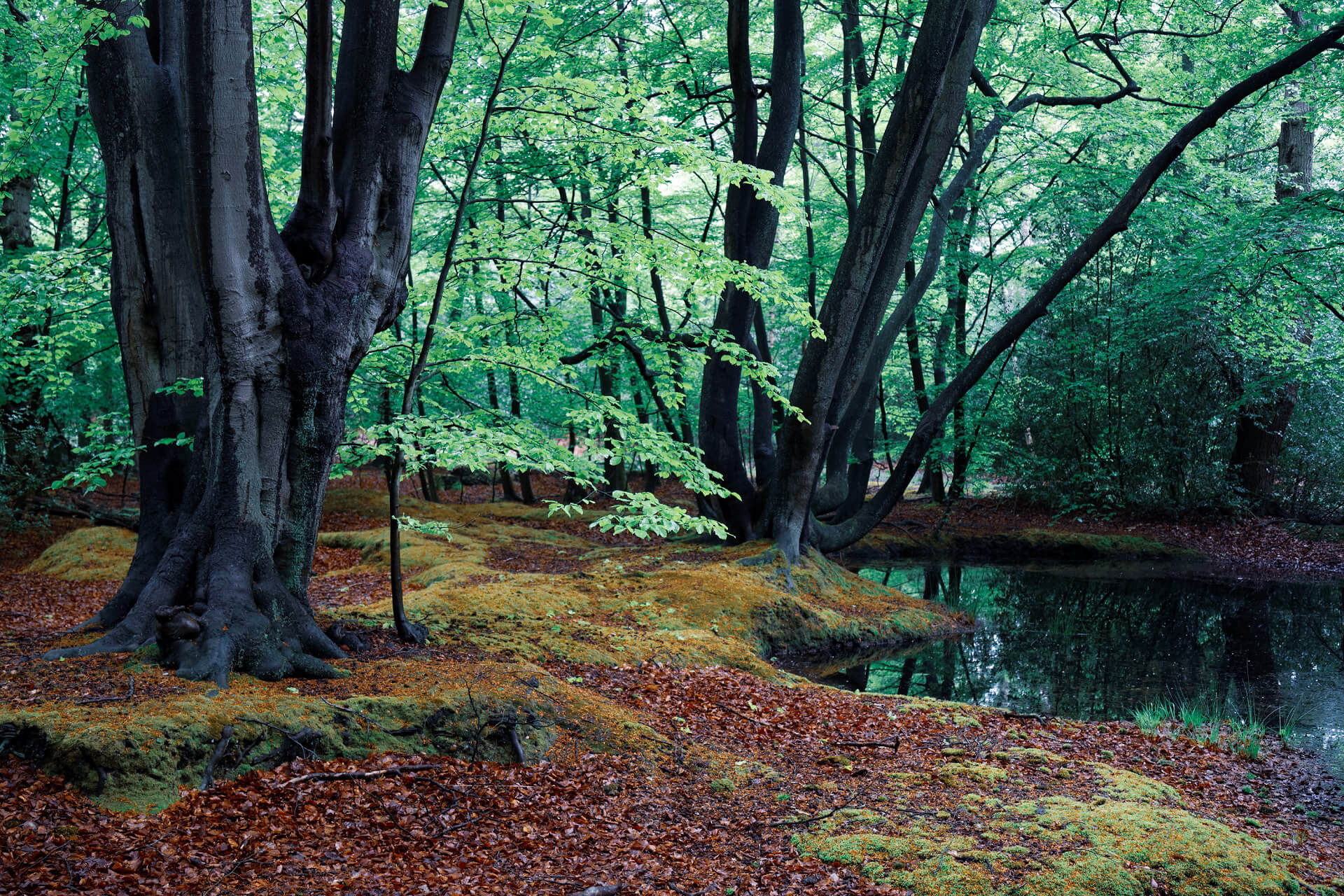 Epping Forest, Essex, England