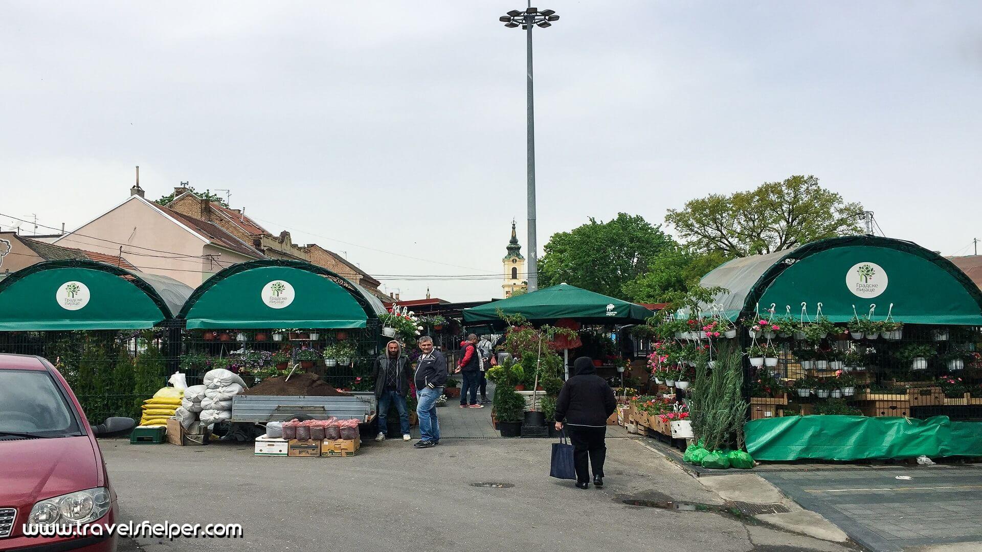 Green Wreath, Belgrade