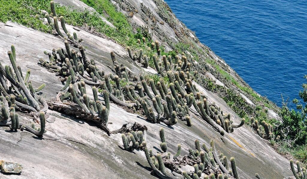 Ilha da Queimada Grande - Those Places Are Forbidden For Tourists