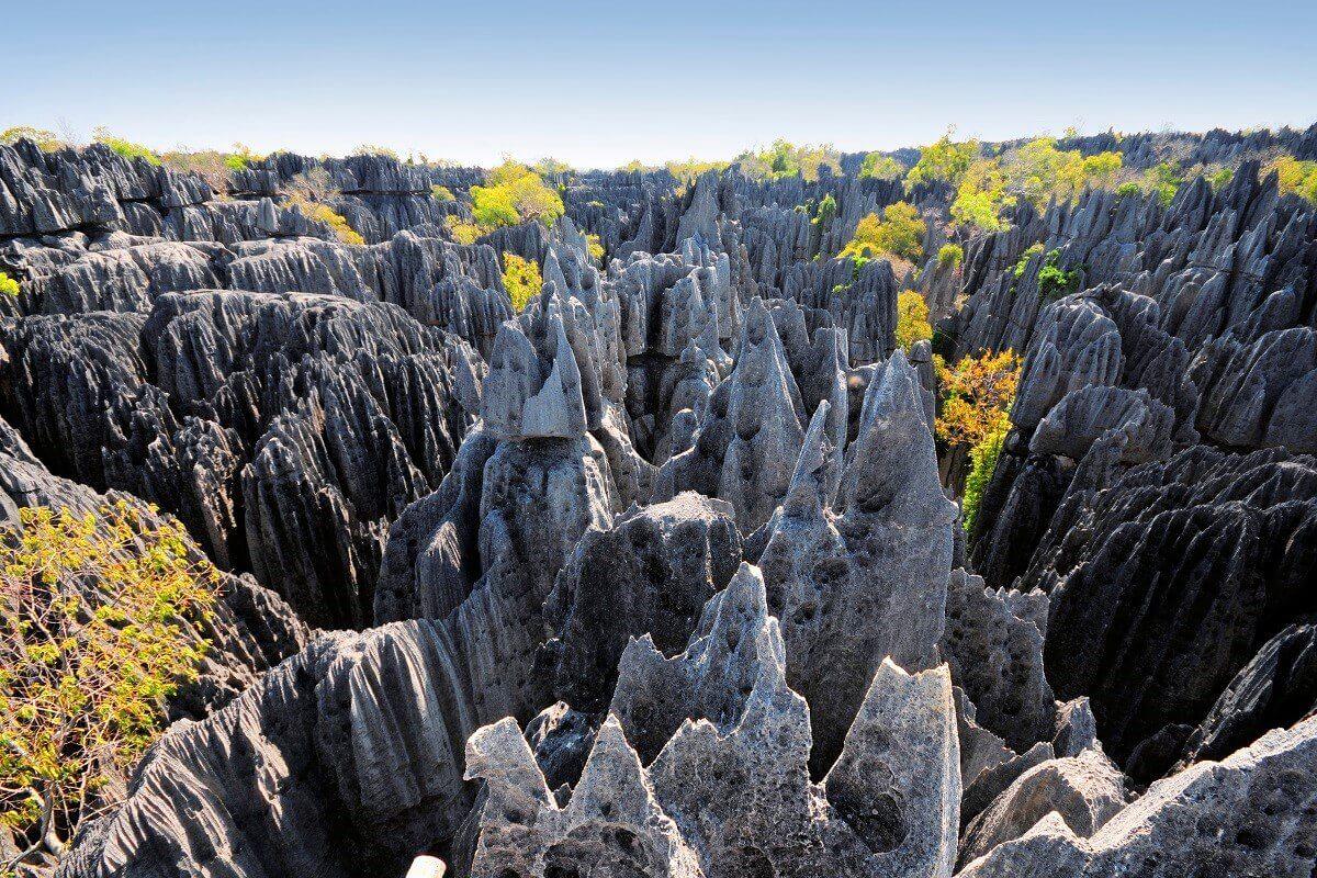 STONE-FOREST-MADAGASCAR