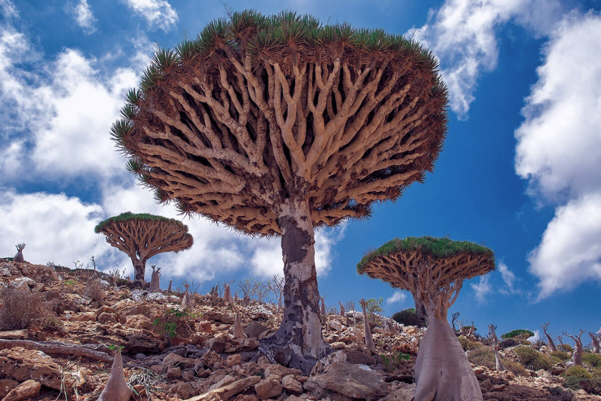 Socotra - Enchanting Destinations That Tourists Constantly Overlook