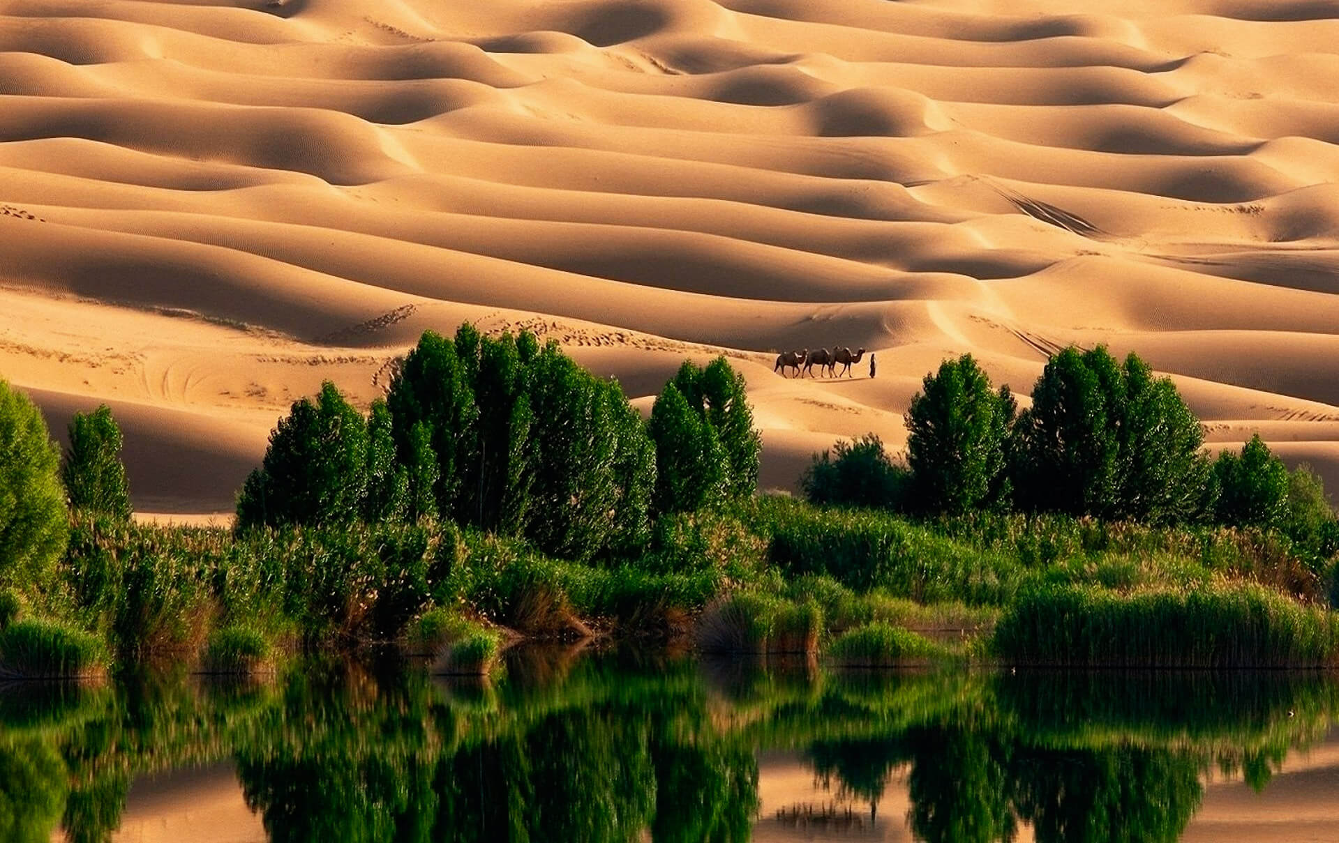 Taklamakan - The Magic Of The Most Beautiful Deserts In The World